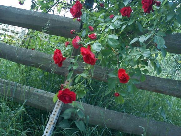 http://alyane.cowblog.fr/images/paysagesavril091051.jpg