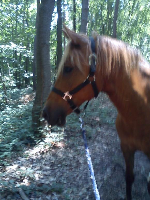 http://alyane.cowblog.fr/images/paysagesavril091211.jpg