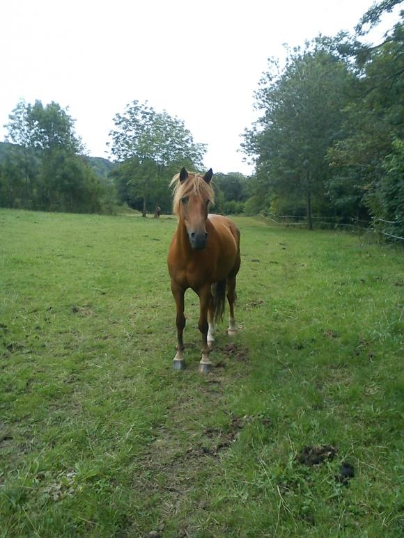 http://alyane.cowblog.fr/images/paysagesavril091222.jpg