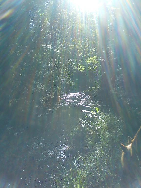 http://alyane.cowblog.fr/images/paysagesavril091261.jpg