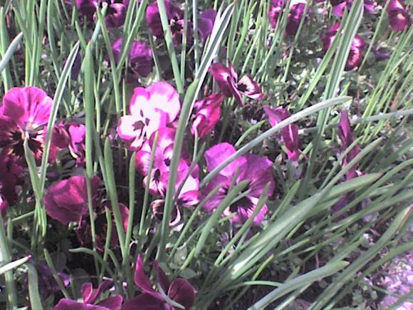 http://alyane.cowblog.fr/images/paysagesavril09184.jpg