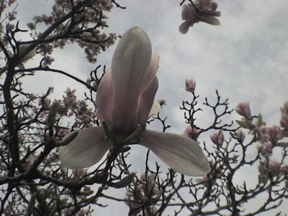 http://alyane.cowblog.fr/images/paysagesavril09186.jpg