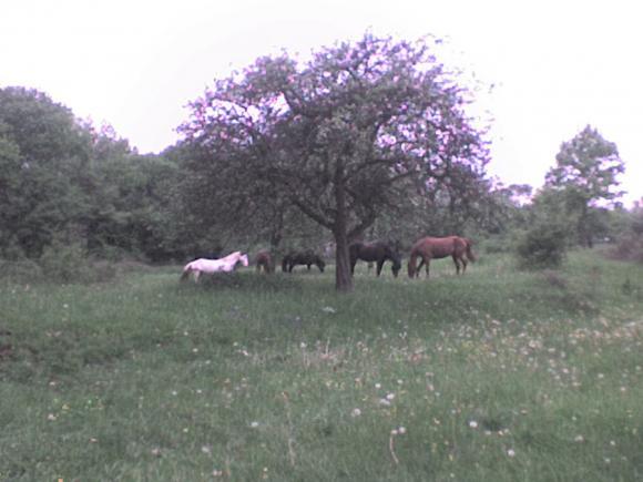 http://alyane.cowblog.fr/images/paysagesavril09243.jpg