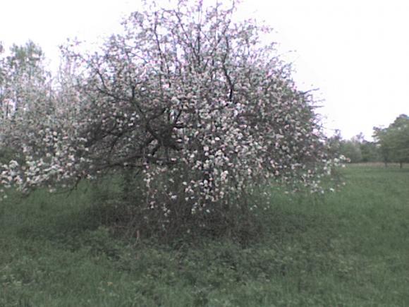 http://alyane.cowblog.fr/images/paysagesavril09246.jpg