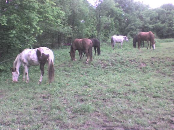 http://alyane.cowblog.fr/images/paysagesavril09256.jpg