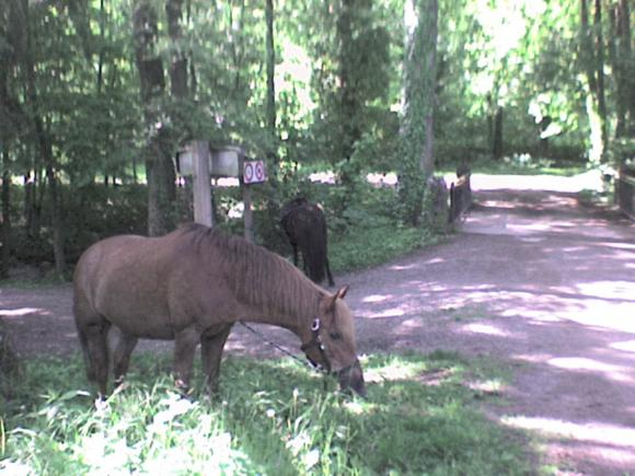 http://alyane.cowblog.fr/images/paysagesavril09267.jpg