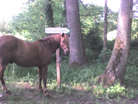 http://alyane.cowblog.fr/images/paysagesavril09271.jpg