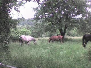 http://alyane.cowblog.fr/images/paysagesavril09286.jpg