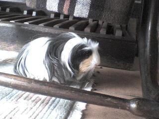 http://alyane.cowblog.fr/images/paysagesavril09307.jpg