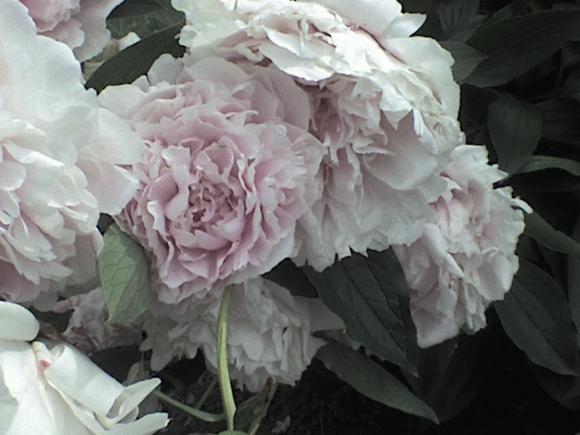http://alyane.cowblog.fr/images/paysagesavril09314.jpg