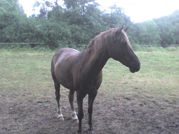 http://alyane.cowblog.fr/images/paysagesavril09366.jpg