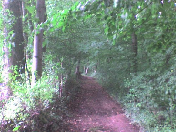 http://alyane.cowblog.fr/images/paysagesavril09388.jpg