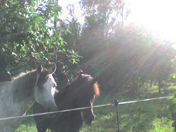 http://alyane.cowblog.fr/images/paysagesavril09394.jpg