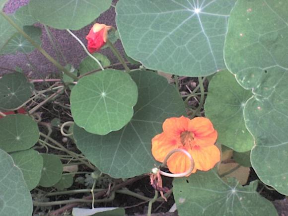 http://alyane.cowblog.fr/images/paysagesavril09421.jpg