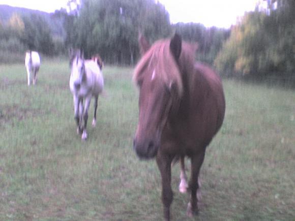 http://alyane.cowblog.fr/images/paysagesavril09442.jpg