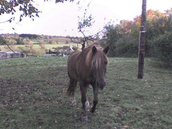http://alyane.cowblog.fr/images/paysagesavril09505.jpg