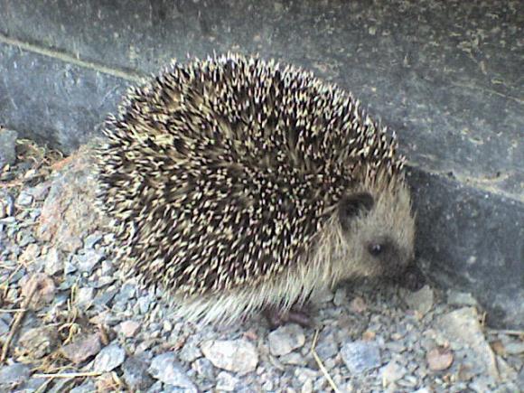 http://alyane.cowblog.fr/images/paysagesavril09595.jpg