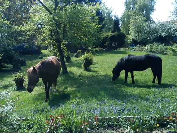 http://alyane.cowblog.fr/images/paysagesavril09970.jpg